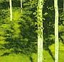 Poplar Grove XII, Auvillar, 2005 :: pigmented inkjet print