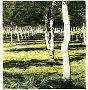 Poplar Grove XVI, Auvillar